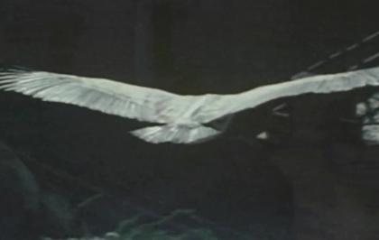 Il volo dell'avvoltoio