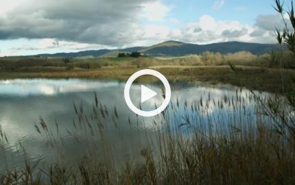 Lo Stato non abbandoni la tutela dell'Ambiente - intervista a Fulvio Mamone Capria