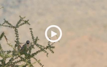 Il tessitore e il suo nido