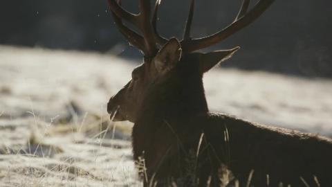 Il cervo e la montagna